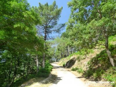 Pinares de la Angostura en Piedralaves;ruta de senderismo senderismo sierra de madrid